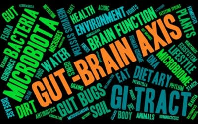 gut microbiome brain connection