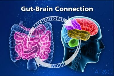 mood microbiome connection